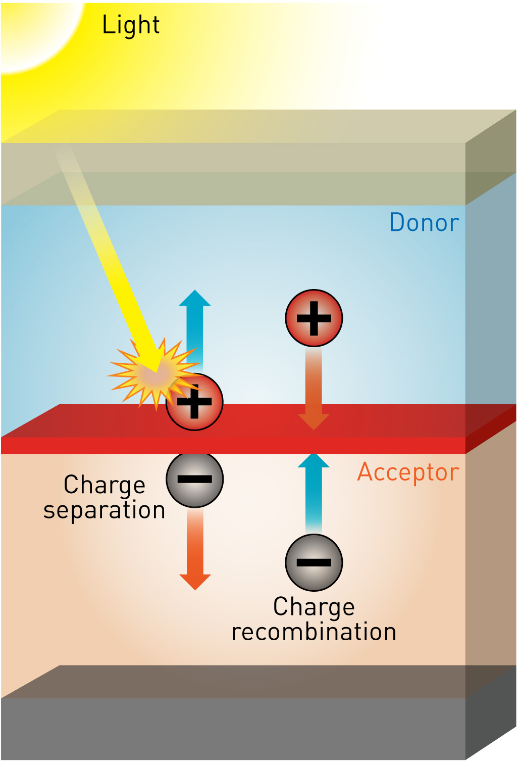 Working At The Interface For Future Energy Riken How Solar Panels Work Diagram Panel Photovoltaic Efficiency Of Polymer Cells Could Be Improved By Precisely Controlling Between Organic Layers